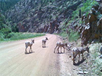 Mountain biking with kids in Waterton Canyon